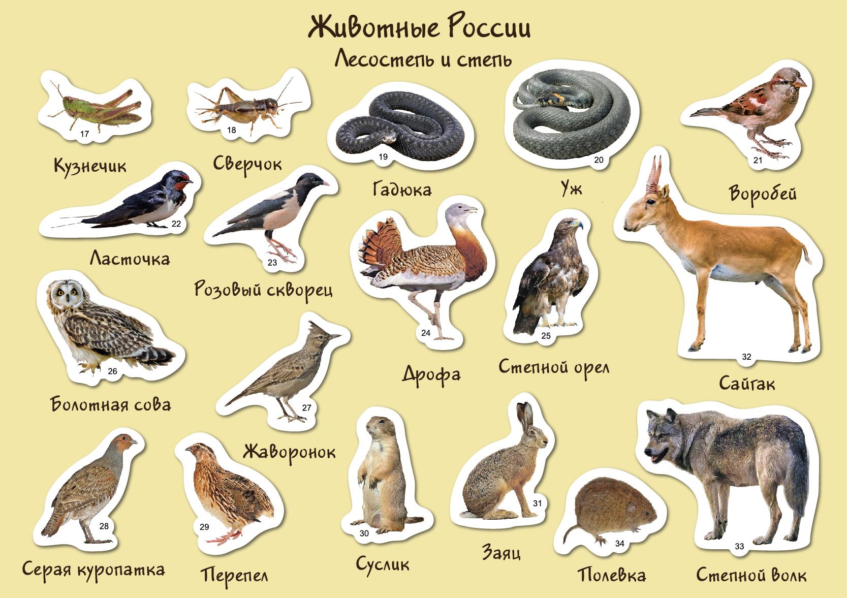 основание карта россии с картинками животных виде
